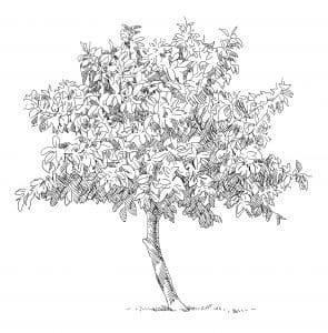 balham counselling ddc dijana dawson counselling tree
